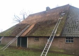 Het handmatig verwijderen van algen en mossen van een rieten dak